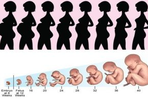 Interested to know pregnancy stages? Join me here