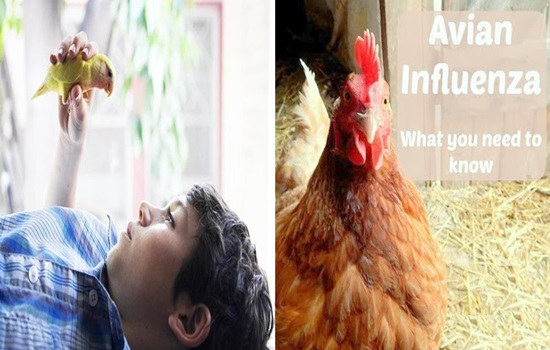 What You Should Know About Avian Influenza