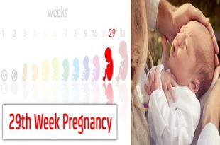 29Weeks Pregnant An Exciting Step toward Your Delivery