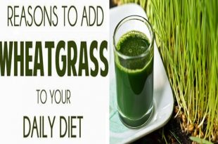 5 Reasons Why To Include Wheatgrass Juice In Your Diet