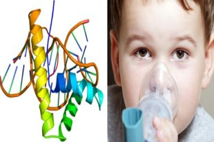Protein HMGB1 might be the way to a more effective treatment for asthma
