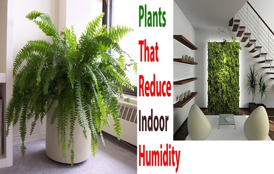 4 Easy To Keep Plants That Will Absorb Indoor Humidity