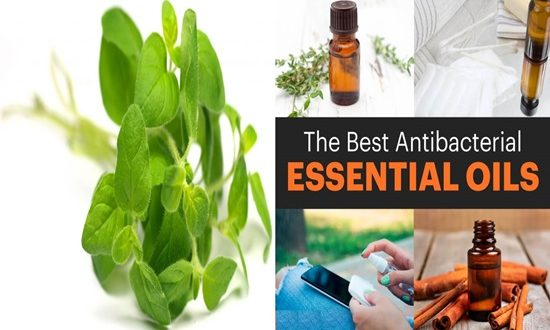 Top 4 Antibacterial Essential Oils