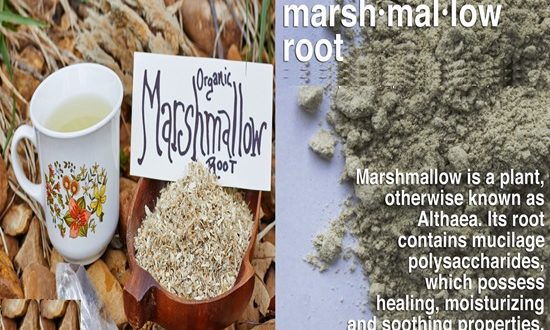 5 Unbelievable Benefits of Marshmallow Roots