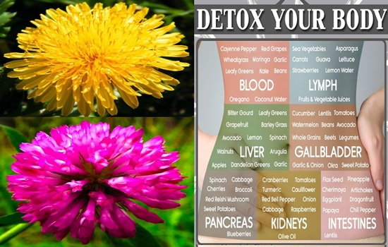 5 Best Herbs That Detox Your Body