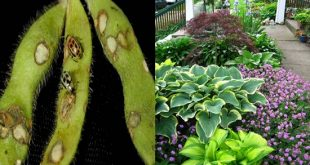 Natural Remedies for Garden Pests and Problems