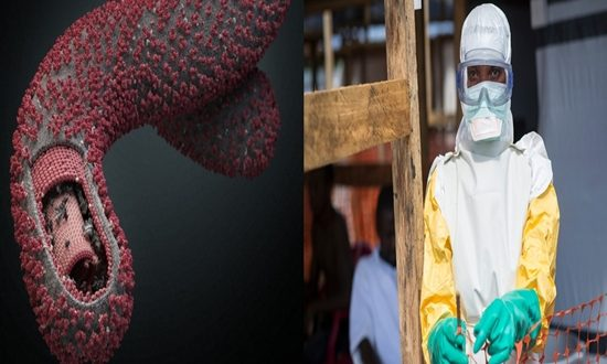 Facts about the Ebola Disease