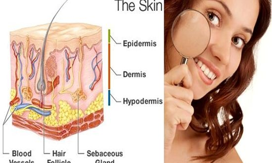 Learn about the different skin layers in your body