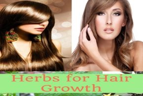 The Best Herbal Teas for Hair Growth