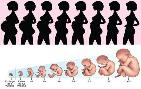 Interested to know pregnancy stages? Join me here – Health 11