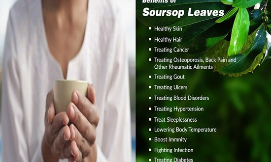 Amazing Health Benefits of Soursop Leaves