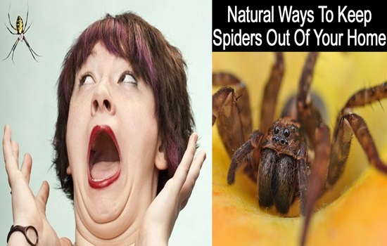 5 smart ways to keep spiders out of your home healthcare for How to keep spiders out of the house