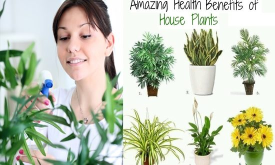 6 Amazing Benefits of Houseplants