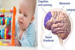 How does a baby's brain work?