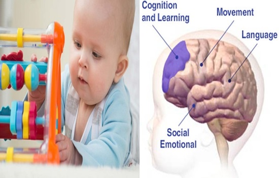 How does a baby's brain work