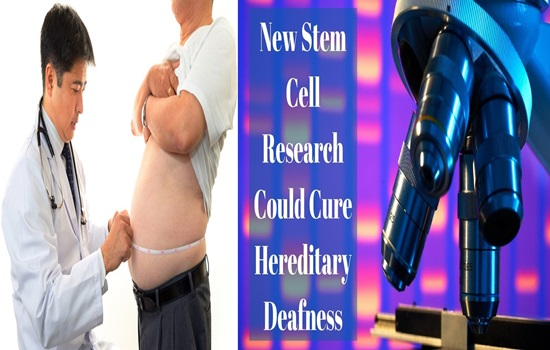 Researchers find new hereditary impacts on fat dissemination