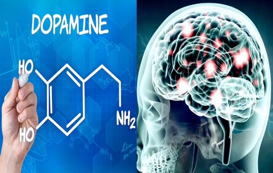 A new method to trace dopamine in the brain