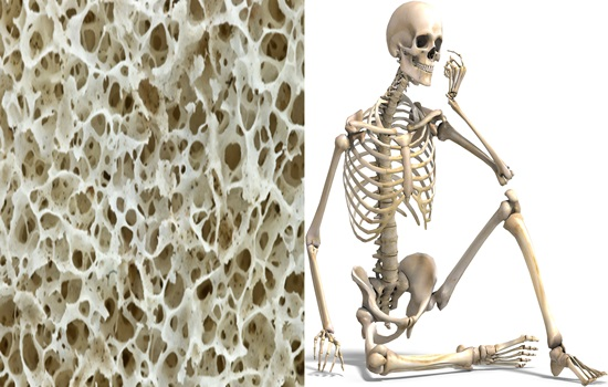Bone regrows by new substances discovered