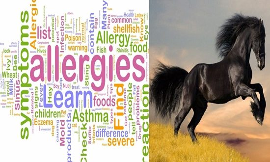 The process of protecting the stable manure against allergies