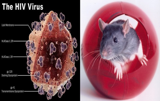 HIV-1 disease eliminated by Gene altering methodology in live animals