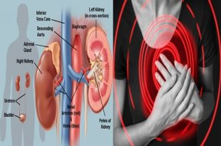 Kidney research prompts astounding disclosure about how the heart forms