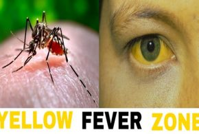 Will yellow fever upsurge once more?