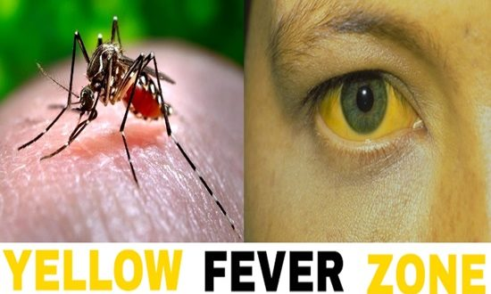 Will yellow fever upsurge once more