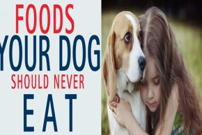 4 Toxic Foods That Your Dog Should Never Eat