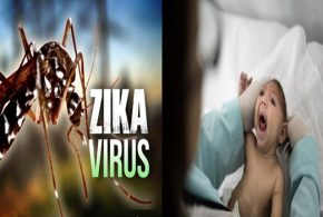 Zika Health risks that can Affect Anyone