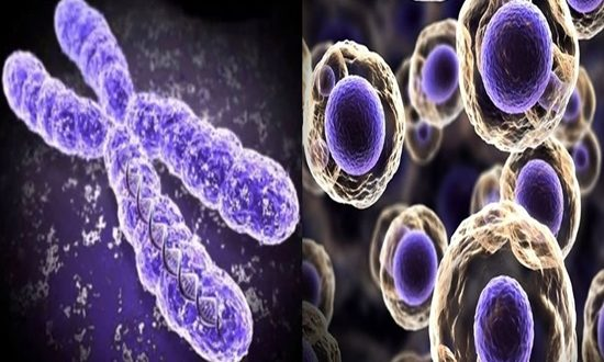 How the right amount of chromosomes is kept by the human cells
