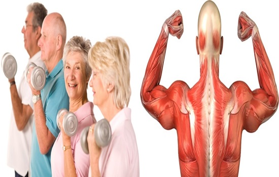 Muscles in seniors could be revived by a new supplement